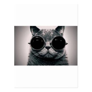 kool frais KAT de chat avec des nuances Cartes Postales