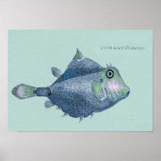 Kust - vintage tropische vissen poster