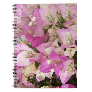 La bouganvillée rose fleurit le carnet de photo