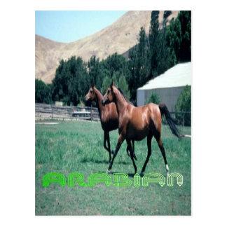La carte postale du cheval Arabe
