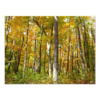 La forêt de jaune part de la photographie de