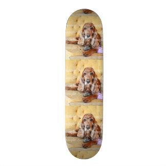 La photo commémorative d'animal familier planches à roulettes customisées