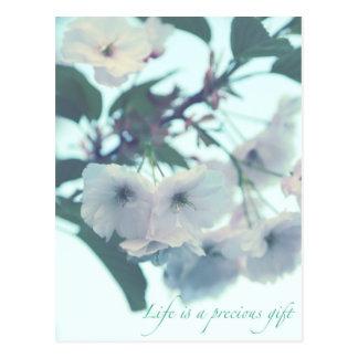 La vie est un cadeau précieux cartes postales