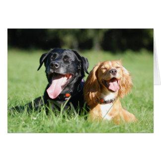 Labrador et carte de voeux fonctionnante de cocker