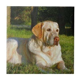 Labrador retriever jaune carreau en céramique