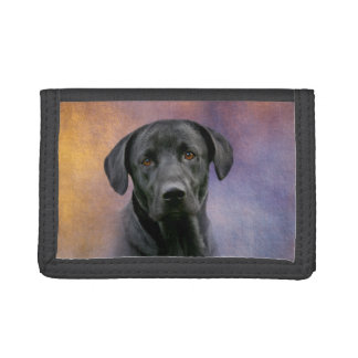 Labrador retriever noir
