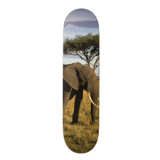 L'Afrique, Kenya, Maasai Mara. Un elehpant dans Mini Skateboard 18,4 Cm