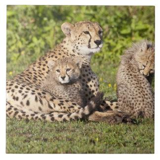 L'Afrique. La Tanzanie. Mère et petits animaux 2 d Grand Carreau Carré