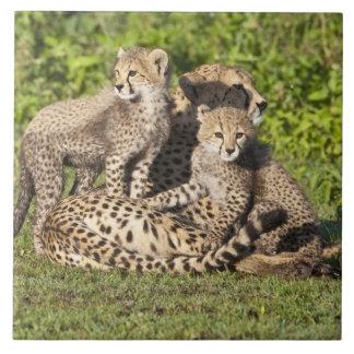 L'Afrique. La Tanzanie. Mère et petits animaux de  Grand Carreau Carré