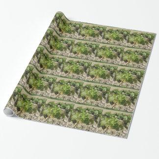 Laitue fraîche dans le terrain papier cadeau