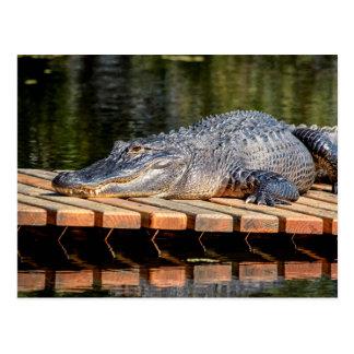 L'alligator chez Homosassa jaillit parc d'état de Carte Postale