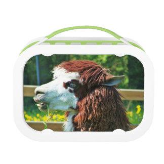Lama - de Doos van de Lunch Lunchbox