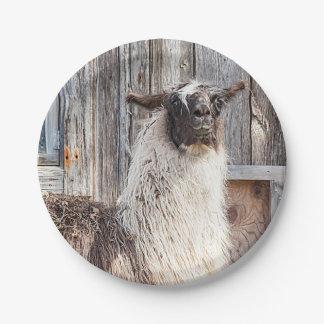 Lama devant une grange assiettes en papier