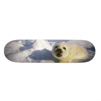 L'Amérique du Nord, Canada, Golfe de St Lawrence. Plateaux De Skateboards Customisés