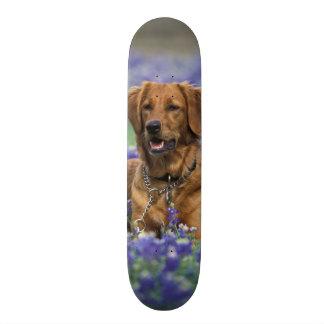 L'Amérique du Nord, Etats-Unis, le Texas. Golden r Skateboard 21,6 Cm