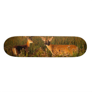 L'Amérique du Nord, Etats-Unis, Montana, bison Mini Skateboard 18,4 Cm