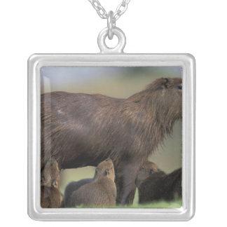 L'Amérique du Sud, Brésil, Capybara de Pantanal Collier