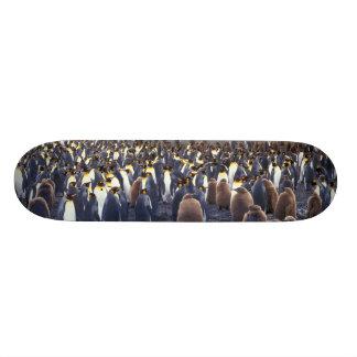 L'Amérique du Sud, île du sud de la Géorgie, roi Skateboards