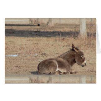 L'âne seul carte de vœux