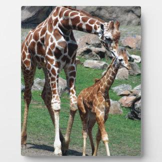 L'animal de safari de l'Afrique de girafe Plaque Photo