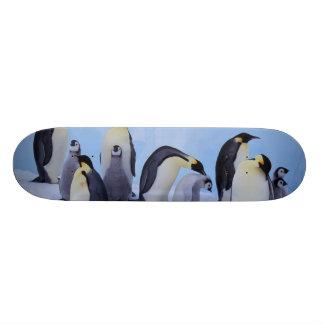 L'Antarctique, pingouin d'Emporer ((Aptenodytes Skateboard Customisable
