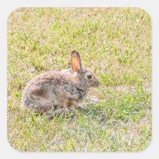 Lapin - Pâques - faune - animal Sticker Carré