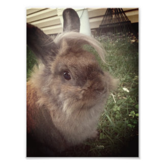 Lapin Photographies