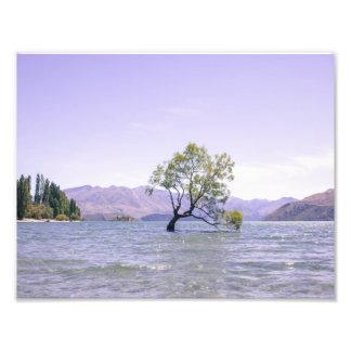 L'arbre de Wanaka Impression Photo