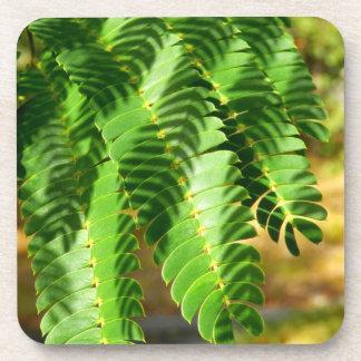 L'arbre en soie persan laisse les dessous de verre