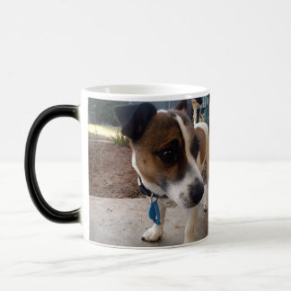 L'attraction de Fox Terrier, magie Morph la tasse