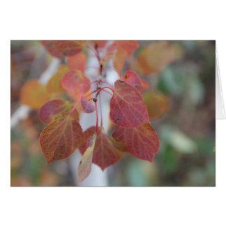 L'automne Aspen laisse deux Carte