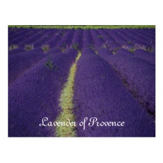Lavande de la Provence Carte Postale