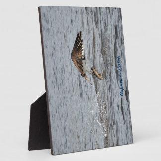 Le balbuzard de pêche et attrapent la photo de la  photos sur plaques