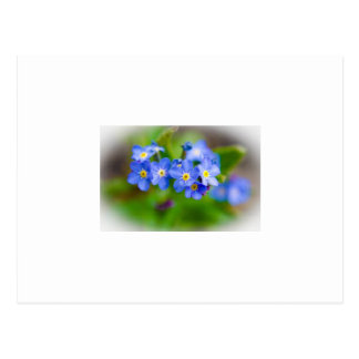 Le bleu minuscule fleurit la carte postale