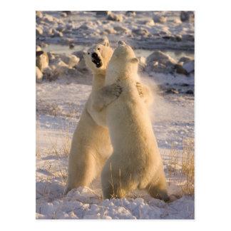 Le Canada, Manitoba, baie de Hudson, Churchill. 2 Carte Postale