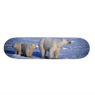 Le Canada, Manitoba, Churchill. Mère d'ours blanc Skateboards Customisés
