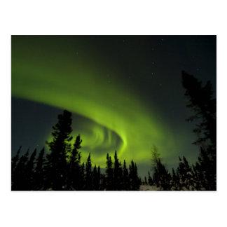 Le Canada, Manitoba. Vue des borealis de l'aurore Carte Postale