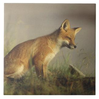 Le Canada, Québec. Petit animal de renard rouge au Grand Carreau Carré