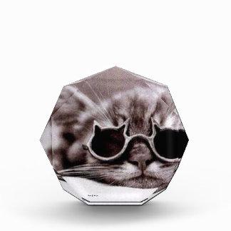 Le chat le plus frais vivant - récompense