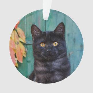 Le chaton mignon de chat noir avec le rouge part