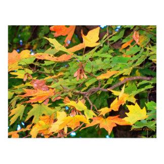 Le chêne d'automne laisse la carte postale de carte postale