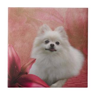 Le chien blanc de Pomeranian fleurit l'animal Petit Carreau Carré