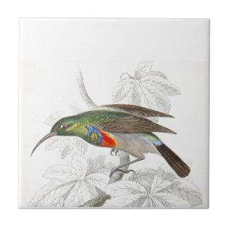Le colibri carreau