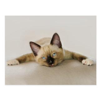 Le cool de séjour et refroidissent le chaton carte postale