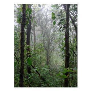 le Costa Rica sauvage Carte Postale