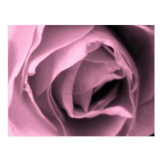 Le cru a inspiré les cartes postales roses Romance