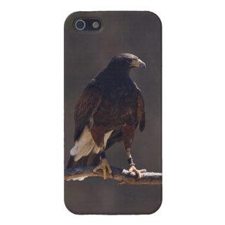 Le faucon de Harris Coques iPhone 5