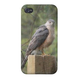 Le faucon du tonnelier étui iPhone 4