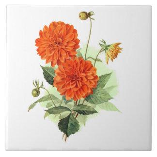 Le feu orange King de dahlia ' Carreau