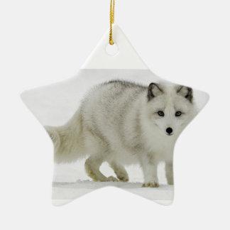 Le Fox arctique blanc se mélange dans la neige Ornement Étoile En Céramique